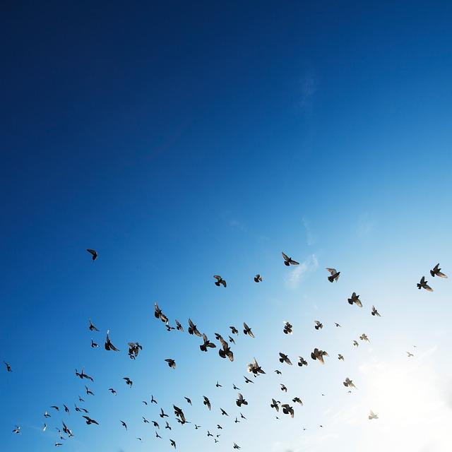 flock-801787_640