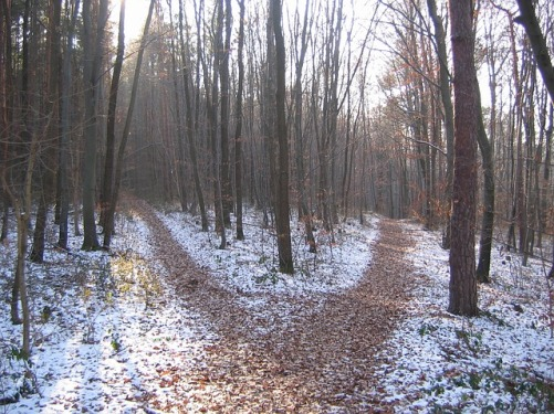 forest-path-238887_640